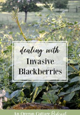 Invasive blackberries in the landscape