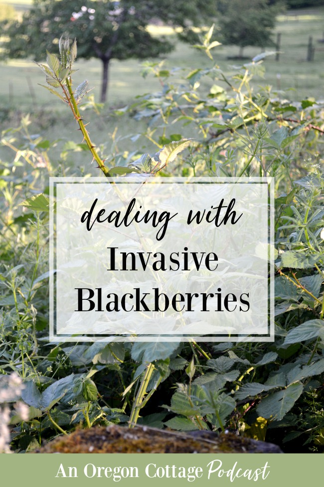 Invasive blackberries in the landscape