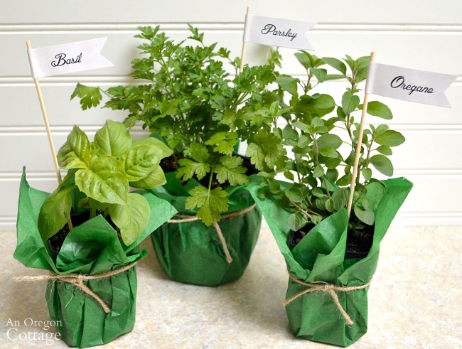 Herb Garden Dressing Gift Basket-wrapped herbs-labels