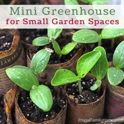 Seedlings in Mini Green Houses