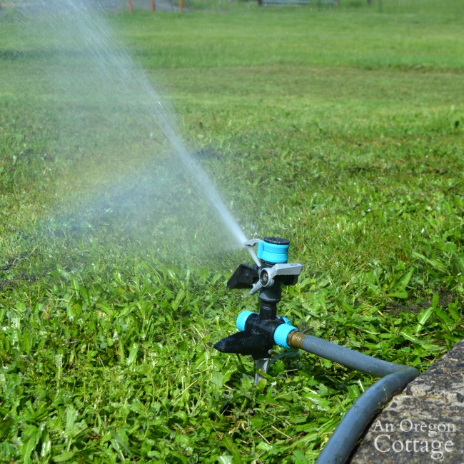 Yard and Garden Watering Tips-watering lawn