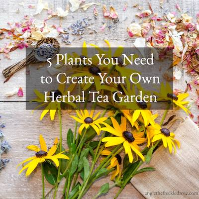 Create An Herbal Tea Garden