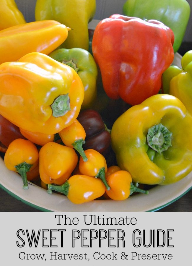 Ultimate Sweet Pepper Guide-Grow Harvest Cook Preserve