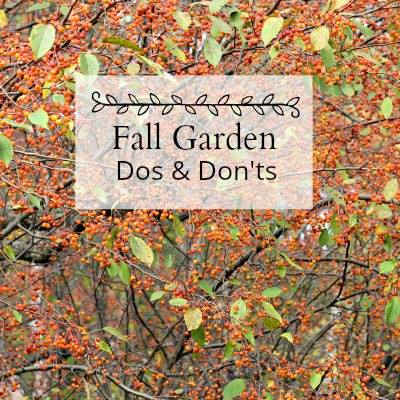 Fall Garden Dos and Donts- Hearth and Vine