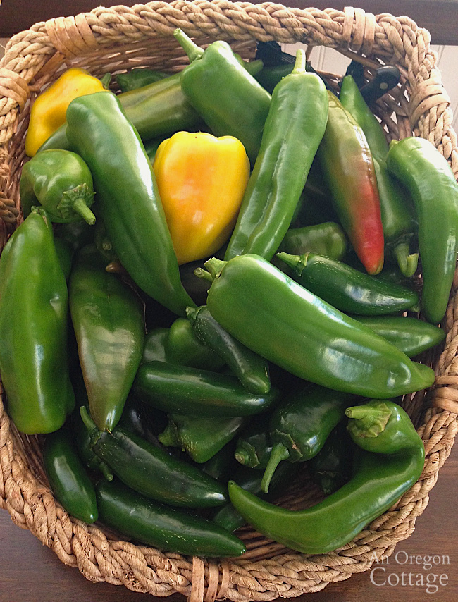Hot Pepper Guide-Basket of hot peppers