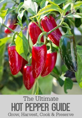 The Ultimate Hot Pepper Guide: Grow, Harvest, Cook & Preserve (With 50+ Recipes!)