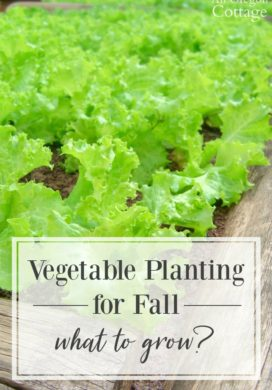 Vegetable Planting for Fall