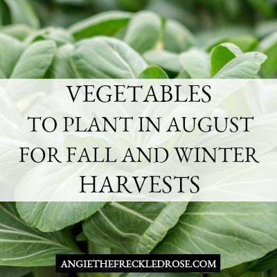 Vegetables to Plant in August-The Freckled Rose