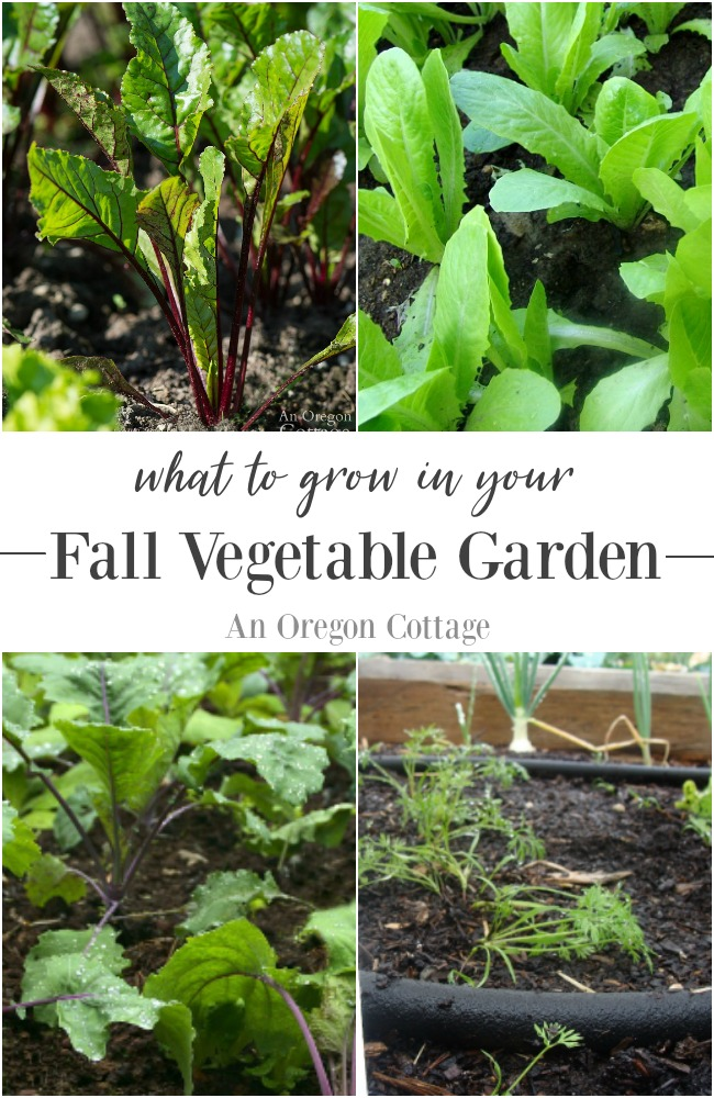What to grow in your fall vegetable garden