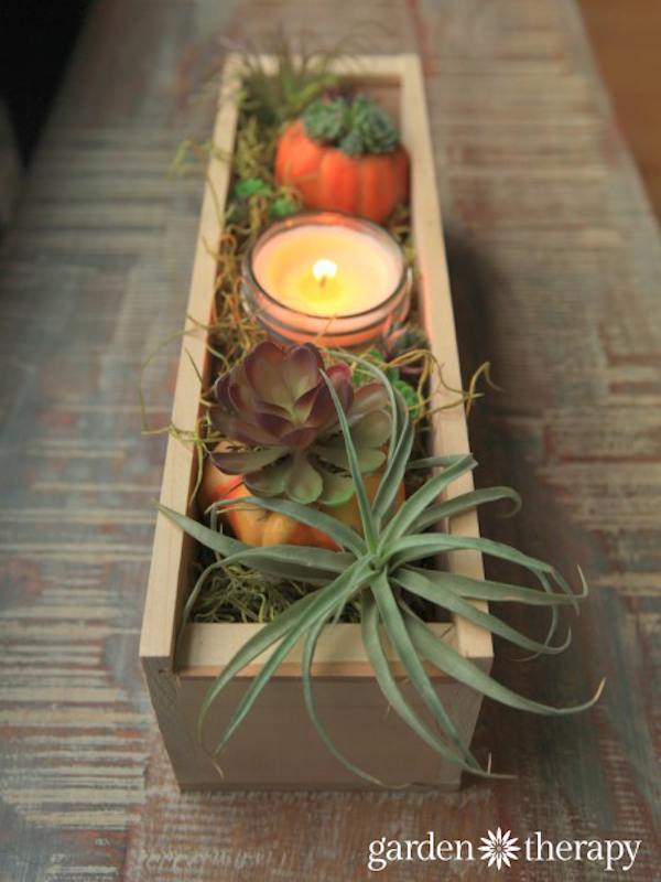 Garden Therapy-Wood-Box-Thanksgiving-Airplant-and-Succulent-Centerpiece