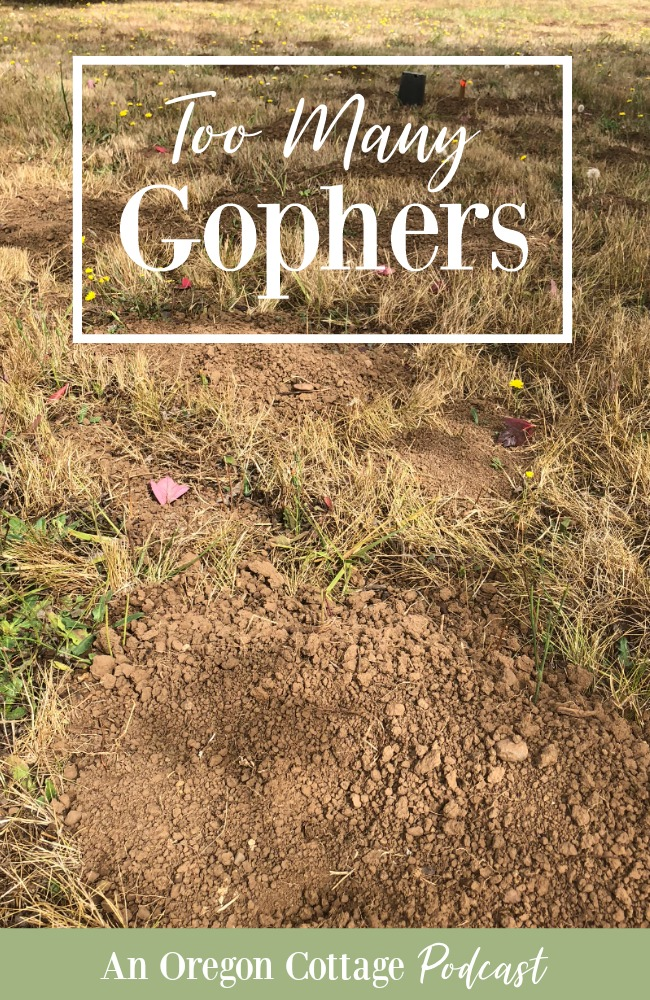 Podcast Ep.42-Too Many Gophers
