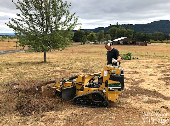 podcast ep.44-using a rented stump grinder