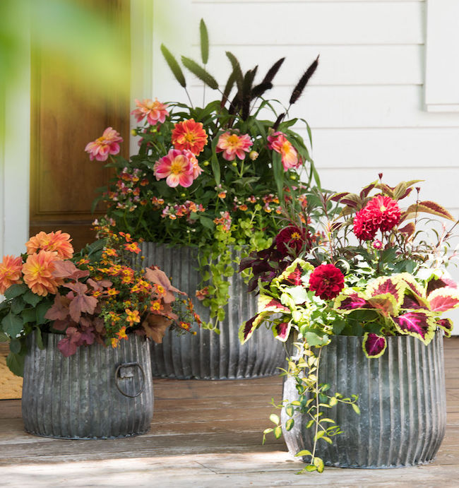 Galvanized Ribbed Barrel Planters