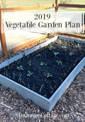 Vegetable garden plan-broccoli and kale bed