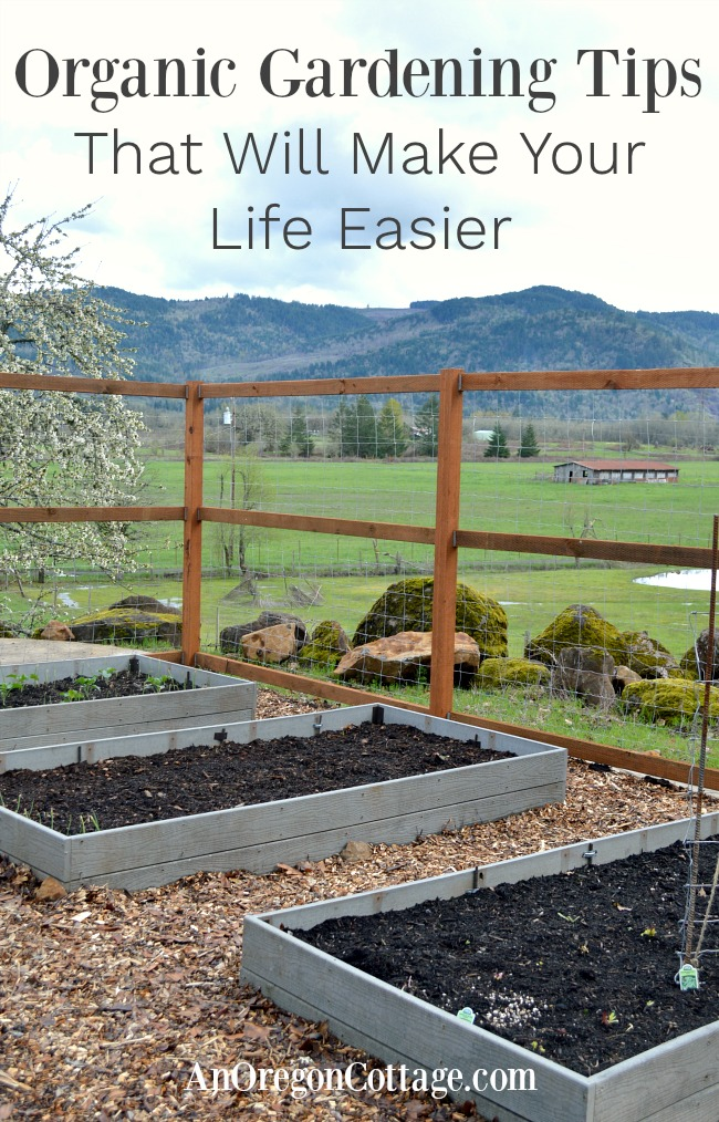 Raised bed vegetable garden for garden tips