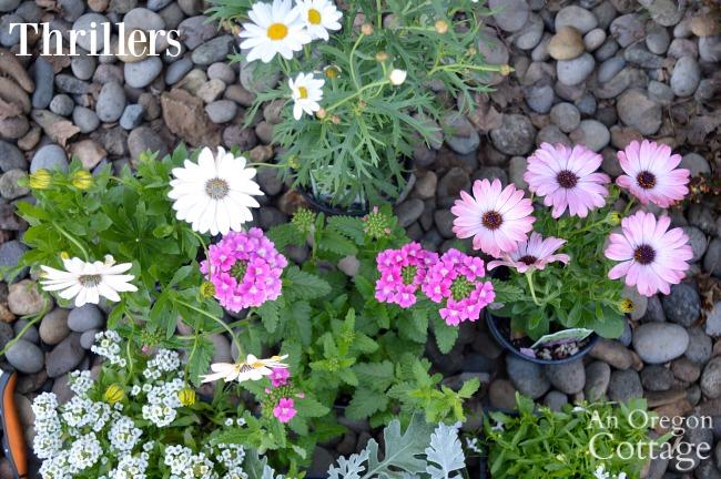Container Gardening Ideas-Thriller plants