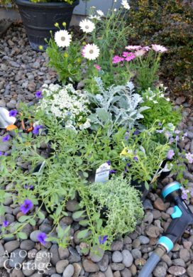 Container garden nursery center plants
