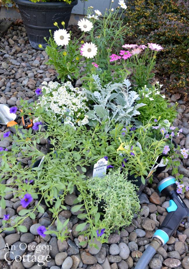 Container garden nursery center plants