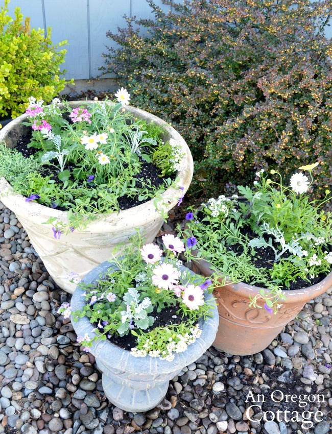 Container gardening ideas-3 containers planted