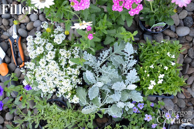 Container gardening ideas-filler plants