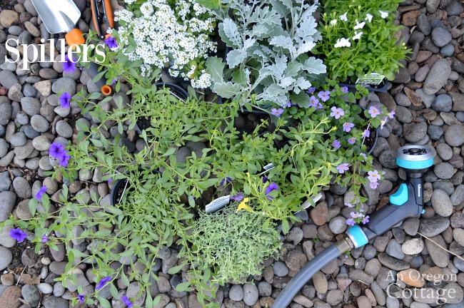Container gardening ideas-spiller plants