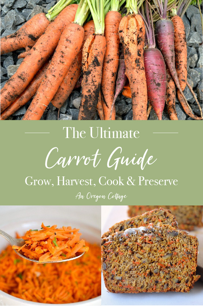 Ultimate Carrot Guide pin image