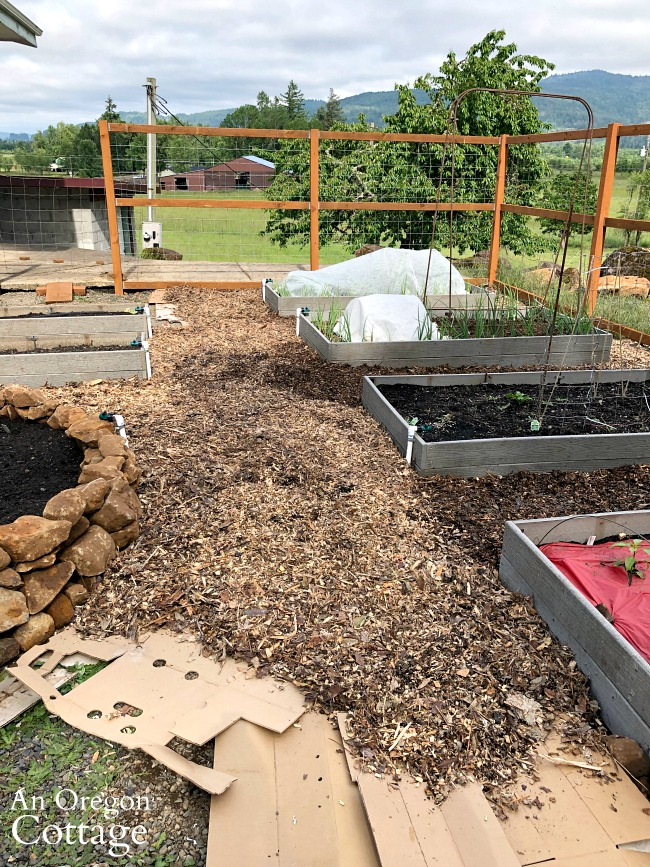 Raised bed garden-laying wood chip paths