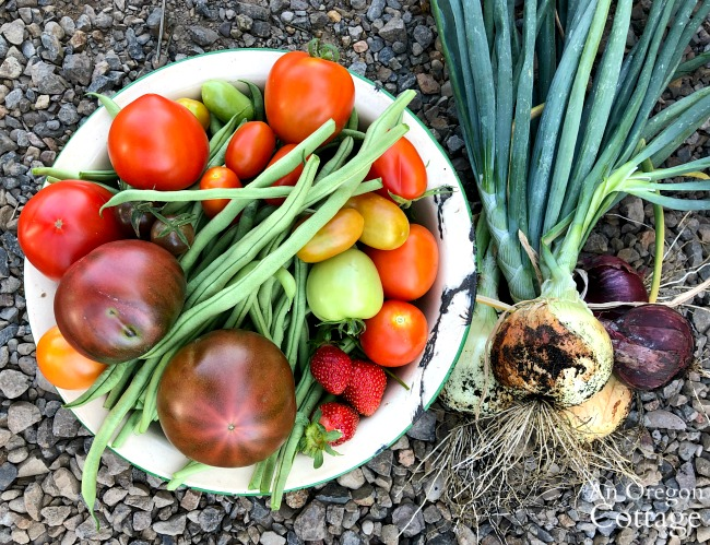Early August vegetable harvest