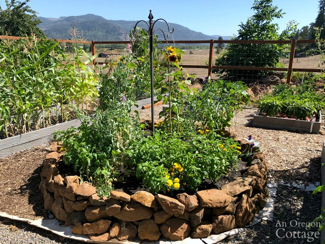 Summer vegetable Garden Tour 2019-round rock bed