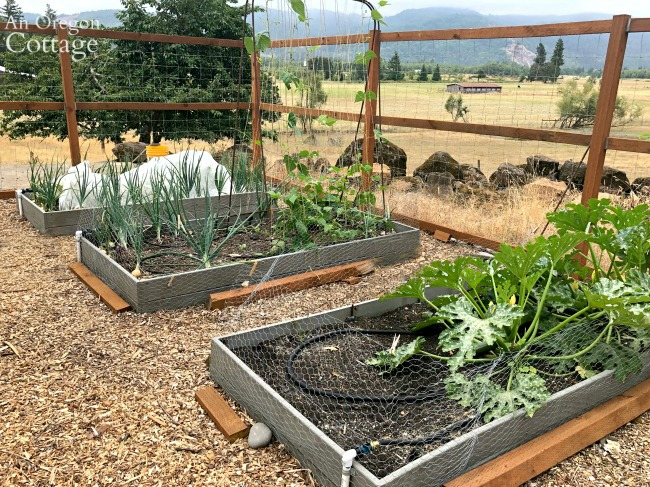 Three raised vegetable beds in summer