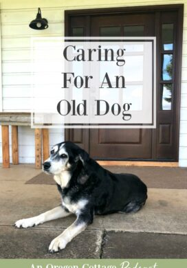 Podcast Episode 62-Caring for an old dog