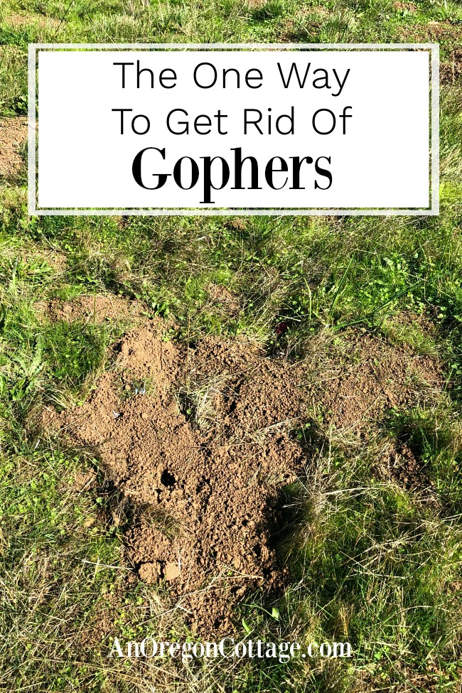 One way to get rid of gophers