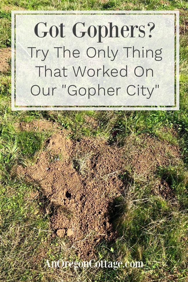 got gophers pin image