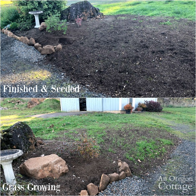dirt mound seeded-grass growing