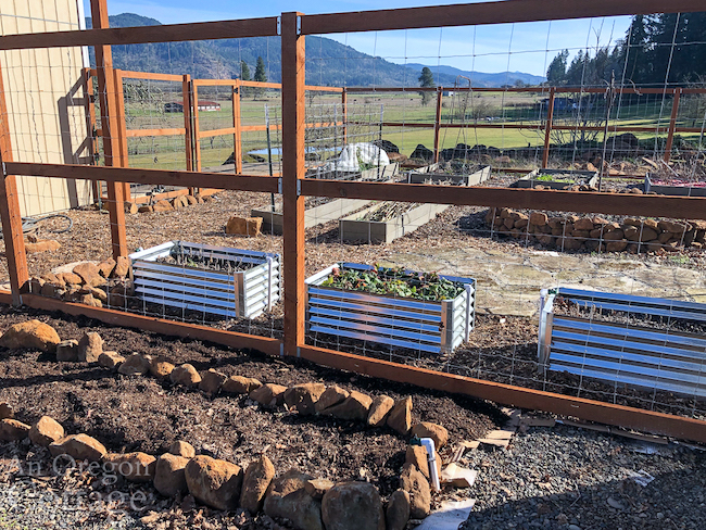 vegetable garden metal beds-feb-20