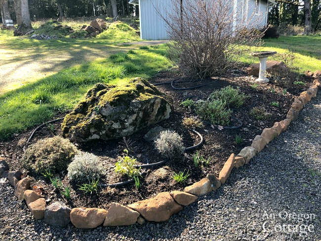 late winter flower bed cleaned up