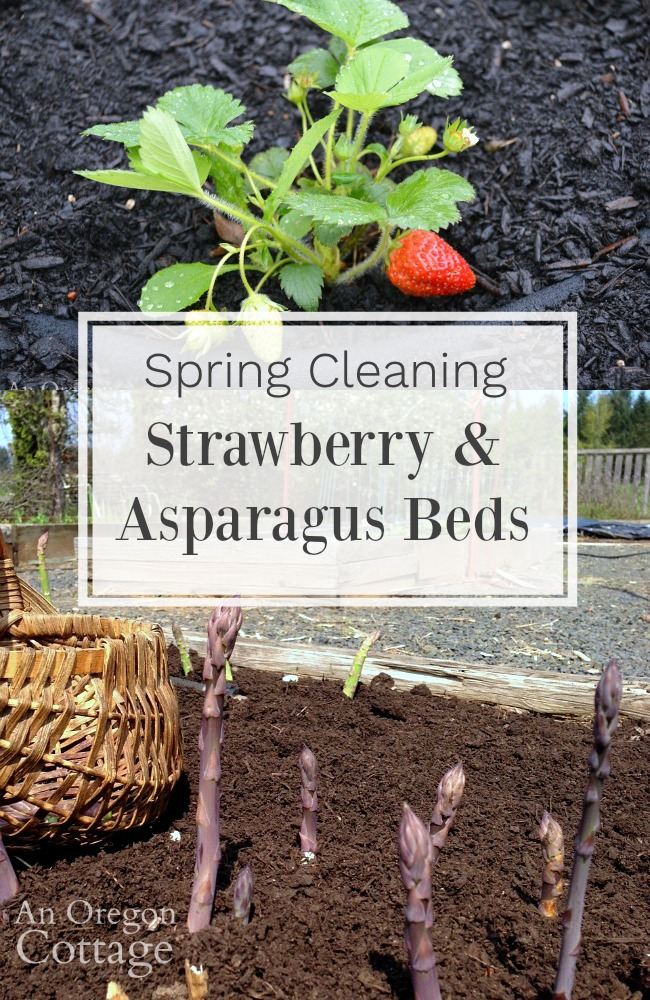 spring cleaning strawberry-asparagus beds pin