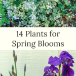 14 plants for spring blooms
