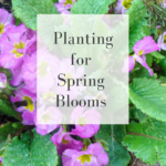 planting for spring blooms_
