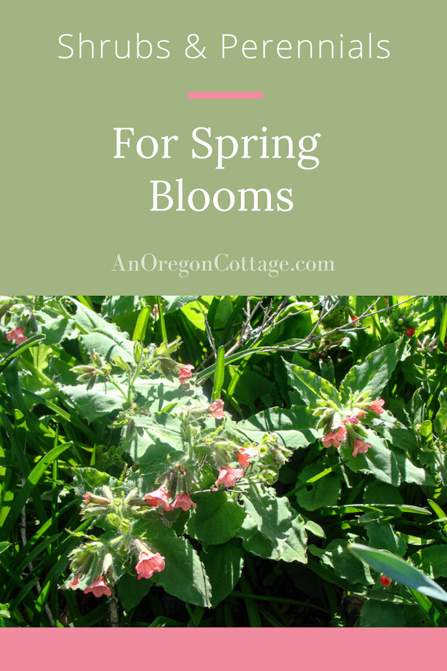 shrubs-perennials-for-spring-blooms