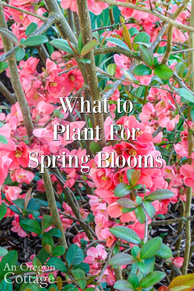 what to plant for spring blooms