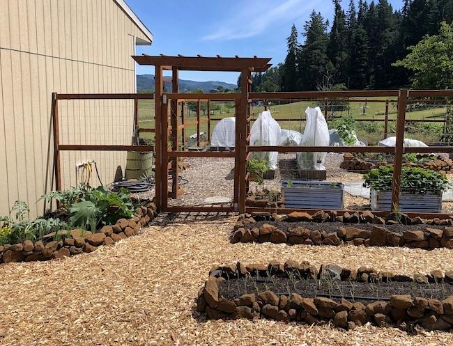 front of vegetable garden in June
