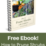 Free Ebook-pruning shrubs