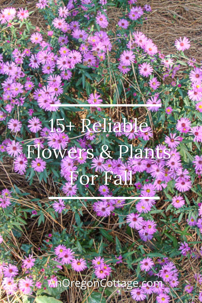 15 reliable fall flowers to plant