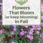 best flowers that bloom in fall