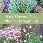 easy flowers that bloom in fall