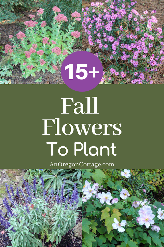fall flowers to plant