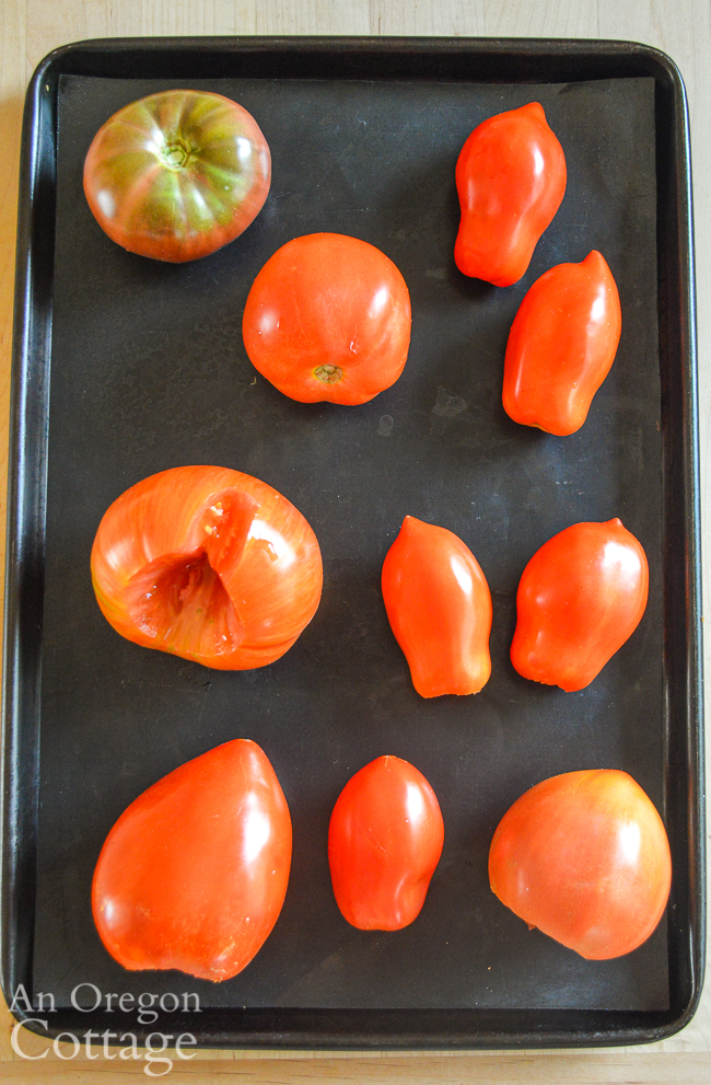 tomatos ready for freezer- on pan above