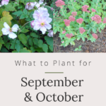 what to plant for fall flowers