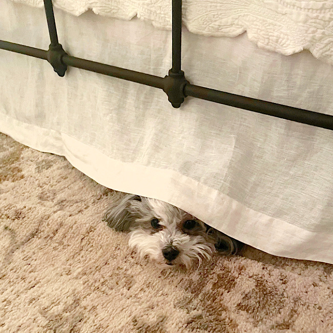 jynx peaking out from under bed